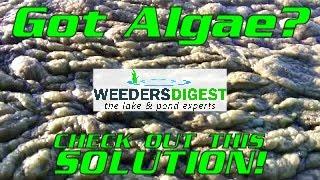 Removing Lake Algae and Pond Algae