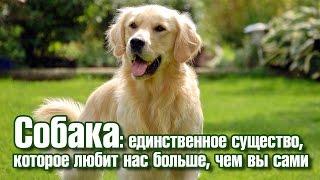 Собака любит вас больше, чем вы сами