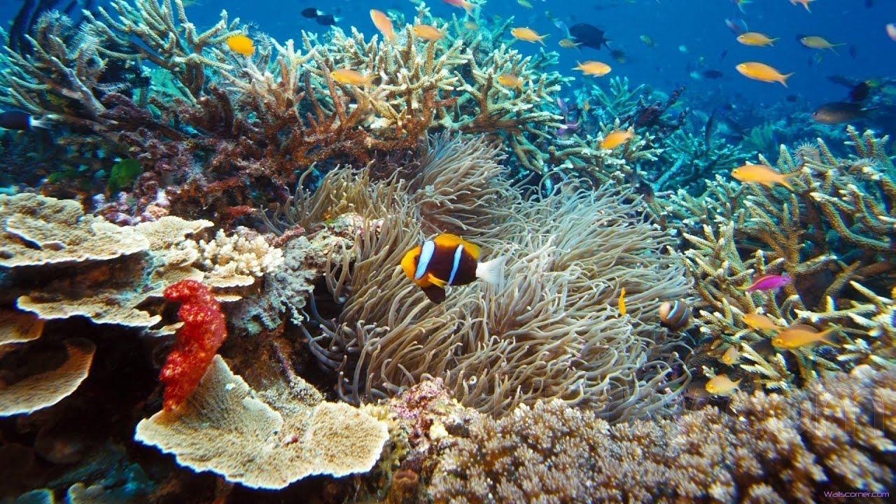 Hors série#1 Plongée île maurice 2014 - YouTube