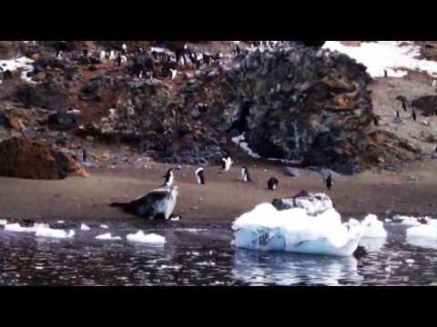 Adélie Penguins, Esperanza Base, Antarctica