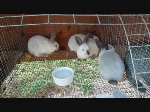 Backyard Homestead Meat Rabbit Update 7-28-10 - YouTube