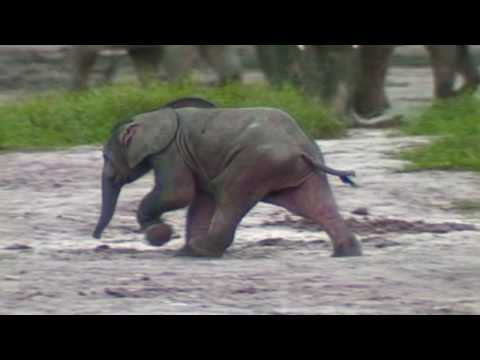 Google Earth Hero: Save The Elephants