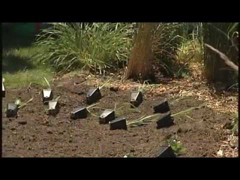 How to Build a Rain Garden for a Sump Pump Discharge