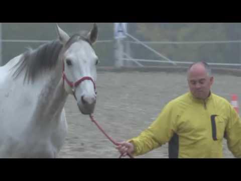 CTS Group - Horse based Trainings