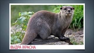 Мои первые работы. Животные России: арктической части, тайги, тундры, гор, лесов и Дальнего Востока.