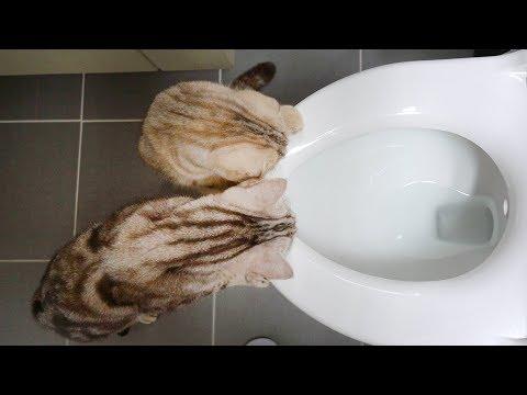 좌변기가 궁금한 고양이들