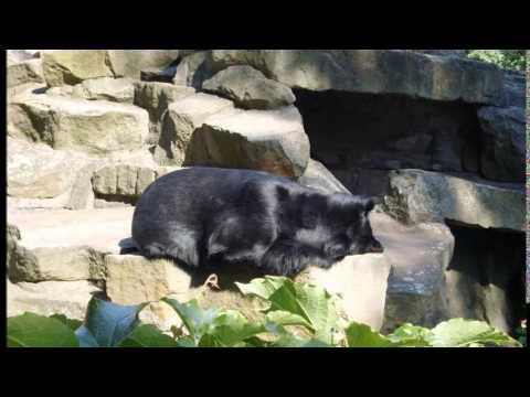 Zoo / TIERPARK BERLIN - Alemanha / Germany