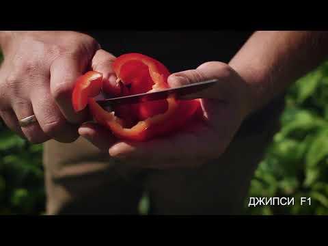 Перец Джипси F1 | агросемцентр | полезные | рассада | агроном | урожай | советы | семена | купить | джипси | перец