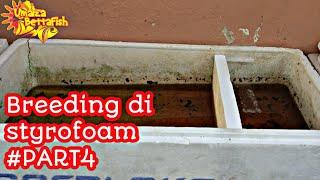 BREEDING SYSTEM STYROFOAM #PART4