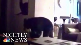 Deputy Comes To Rescue Of Teens After Bear Sneaks Into Vacation Home | NBC Nightly News