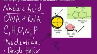 Identifying Macromolecules