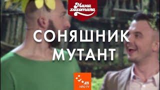 Соняшник мутант| Шоу Мамахохотала | НЛО TV