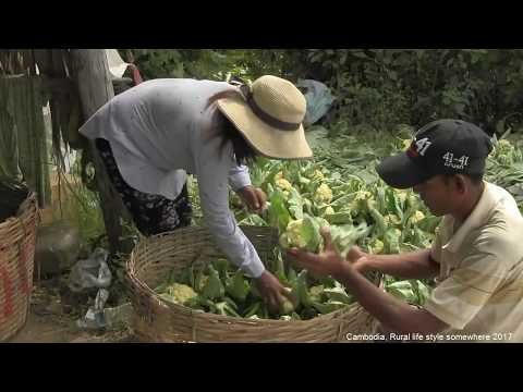What are the Activities in the Cambodia  Rural Areas?