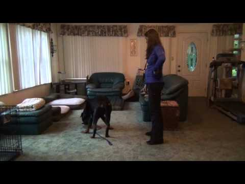 Severe Food Aggression & Resource Guarding – Before/After Dog Training