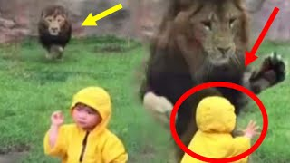 lion at japan zoo tries to paw boy through glass   hd video   live trending news