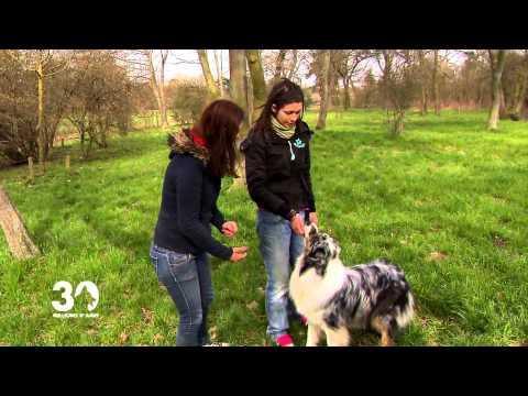 Education canine : Des petits tours avec son chien 30 millions d'amis