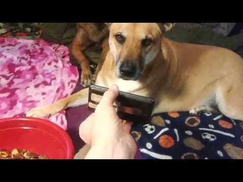 Dog Behavior 101:  Favorite Song