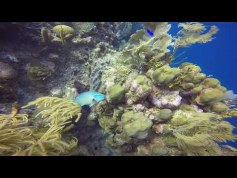 Tropical Marine Biology in Honduras ICA video 2017