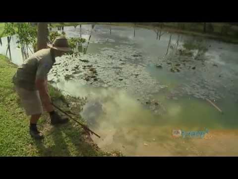 15 foot Hungry Crocodile vs Man with Food, Australia Queensland