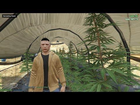 GTA V RP - FiveM - Illegal money (Weed) & Police intervention during the harvesting