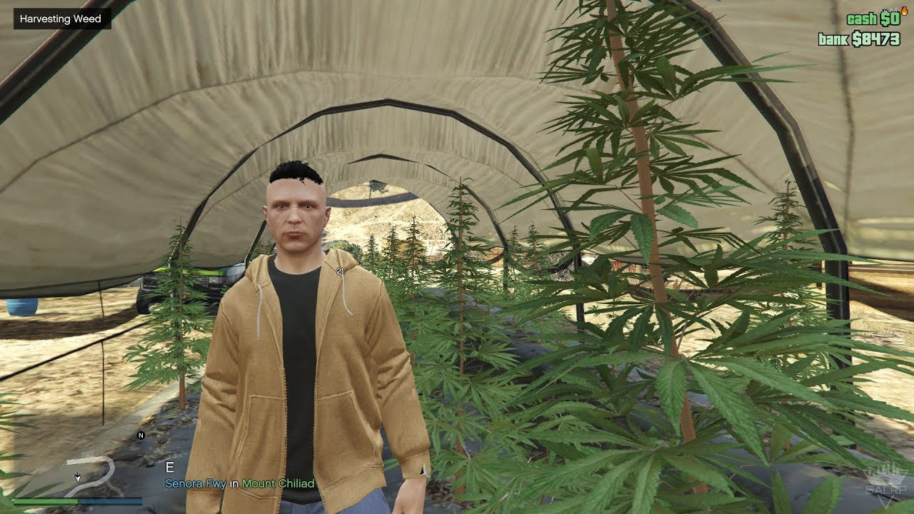 GTA V RP - FiveM - Illegal money (Weed) & Police intervention during the  harvesting