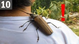 10 SUPER SIZED BUGS that actually exist