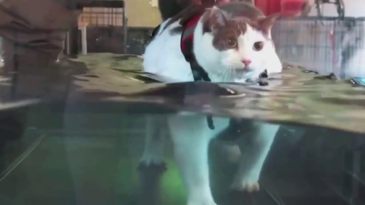 Cat On Treadmill Youtube