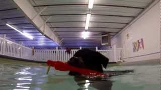 Dekohcam Swimming At Canine Rehabilitation & Conditioning Group (crcg) In Englewood Co