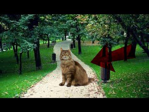 optical illusions find cat # 8