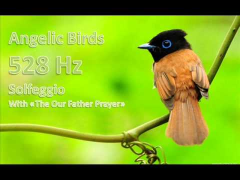 Angelic Birds - 528 Hz Solfeggio DNA Repair - The Our Father