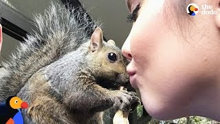 Squirrel Keeps Coming Back To Rescue Mom - GIBBY | The Dodo
