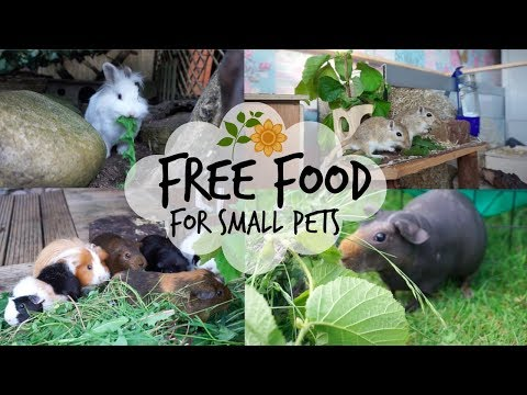 Small Pet Forage Guide (free food!)