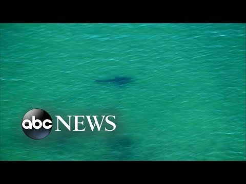Suspected shark attack reported off the coast of Cape Cod