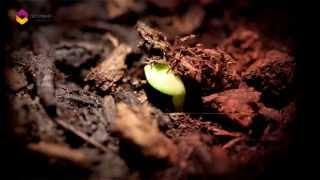 Ah İnsan Spotu - TRT DİYANET 2017 Video