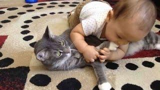 Смотреть лучшие приколы+про кошек.Лучшие приколы с кошками!