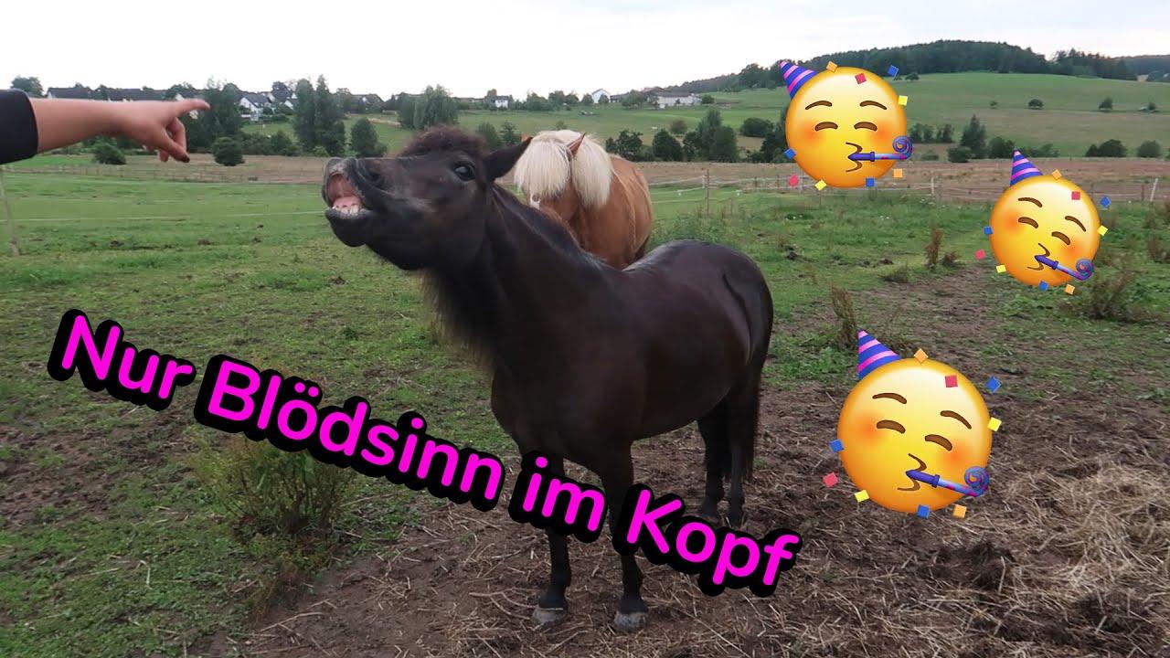 Ein Ferientag mit mir 😎️☀️| Pony-Power 🐴💥