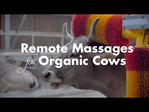 Remote massages at the touch of a button | Bio Suisse