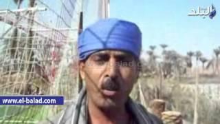 بالفيديو والصور.. «مستنقع» بني رافع بأسيوط يحاصر 50 ألف مواطن بالأمراض
