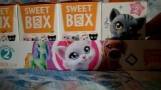 Обзор на Игрушки Sweet BOX Пушистики котята коллекция 2