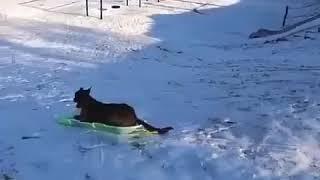 Собака развлекает себя сама (юмор)