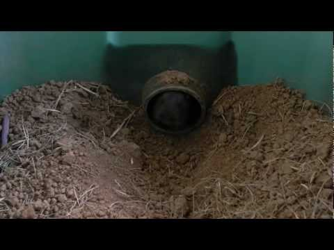 Meet Chomper: The Pet Gopher