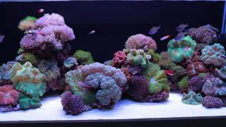 Luscia Reef, An ADG open top reefscape featuring theOne from LUPYLED