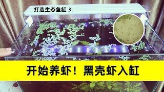 用椰糠养虾是一种什么样的体验?黑壳虾 营养液 温度计 经验分享