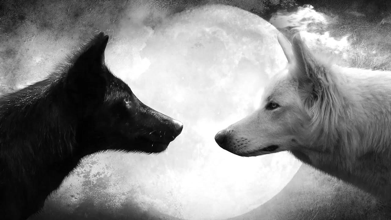 Qué Significa Soñar Con Lobos Sueño Significado Youtube