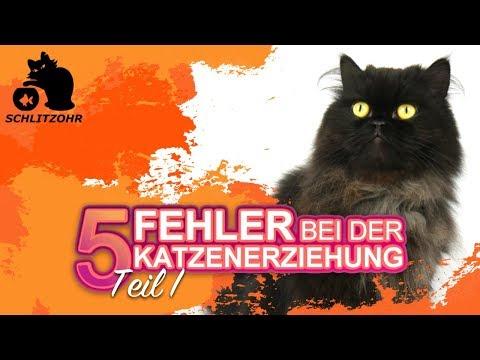 🔥5 Fehler In Der Katzenerziehung | Tipps Zur Erziehung Von Katzen | Katze Erziehen | Teil 1