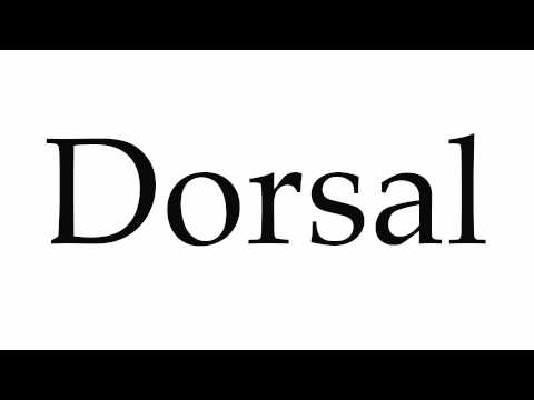 How to Pronounce Dorsal