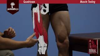 Quadriceps Muscle Test Vizniak