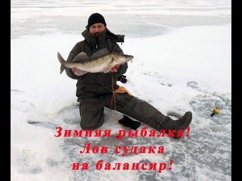 видео о рыбалке окунь щука судак