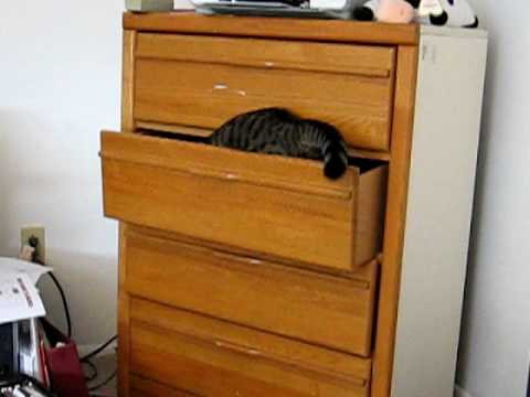 Cute cat opens and hides in a drawer