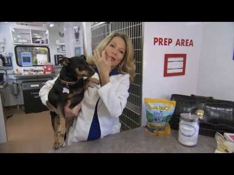 "WLTDO Karen ""Doc"" Halligan - Overweight Dogs & Losing Weight"